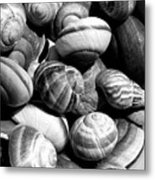 Snail Shells In Black And White Metal Print