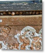 Snails At Home With Lichen Metal Print