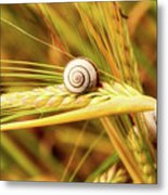 Snails On Wheat Metal Print