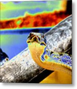 Snake Eyes Metal Print by Peter  McIntosh