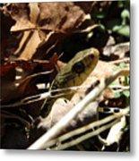 Snake In Nature Metal Print