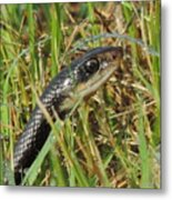 Snake In The Grass Metal Print