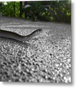 Snake In The Sun Metal Print