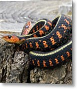 Snakes On A Stump Metal Print