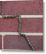 Snaking Up A Brick Wall Metal Print