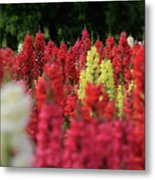 Snap Dragon Flowers Metal Print by Tracy Hall