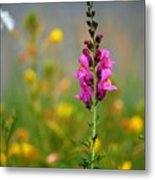 Snap Dragon Metal Print