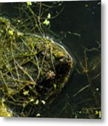 Snapping Turtle Head Metal Print
