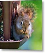 Sneaky Red Squirrel Metal Print
