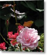 Sniff - Tea Rose Metal Print