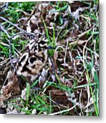 Snipe In Camouflage 2 Metal Print