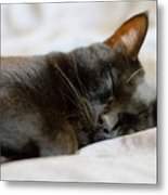 Snoozy Kitty Metal Print