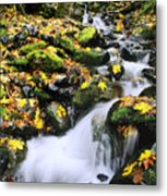 Snoqualmie National Fores Metal Print