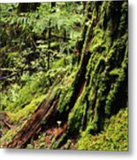 Snoqualmie National Forest Metal Print