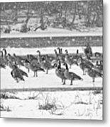 Snow And Geese On The River II Metal Print