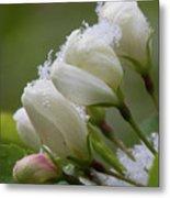 Snow Blossoms Metal Print