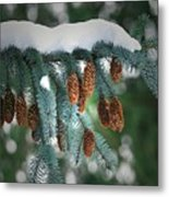 Snow Cones Metal Print by Sharon Talson
