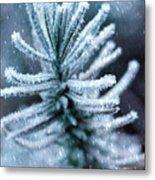 Snow Cover Pine Metal Print