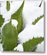 Snow Covered Agave Metal Print