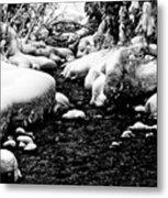 Snow Covered Banks Metal Print