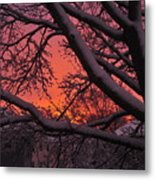 Snow Covered Branches At Sunset Metal Print