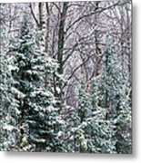 Snow-covered Forest, Wisconsin, Usa Metal Print