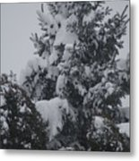 Snow Covered Pine Metal Print