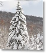 Snow Covered Spruce Metal Print