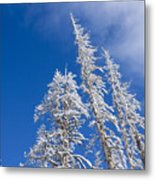 Snow Covered Trees Metal Print