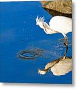 Snowy Egret 6 Metal Print