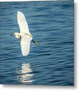 Snow Egret In Flight Metal Print
