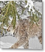 Snow Fall Metal Print