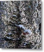 Snow Flocked Pines One Metal Print