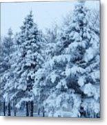 Snow Flocked Pines Metal Print