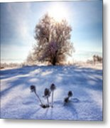 Snow Flowers Metal Print