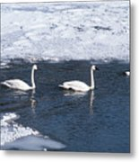 Snow Geese On The Move Metal Print