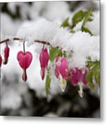Snow Heart Metal Print by Terry Walters