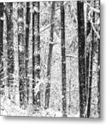 Snow In A Forest Metal Print