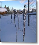 Snow In Bend Oregon  Metal Print