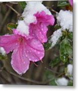 Snow In Houston Metal Print