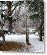 Snow In Pines Metal Print