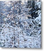 Snow In The Forest Metal Print