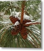 Snow In The Pine Metal Print