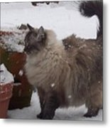 Snow Kitty Metal Print