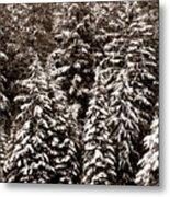 Snow-laden Forest Metal Print