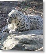 Snow-leopard Metal Print