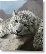 Snow Leopard Relaxing Metal Print
