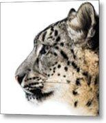 Snow Leopard Xv Metal Print