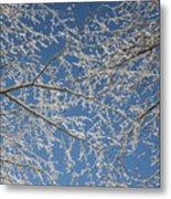 Snow Lined Limbs Metal Print