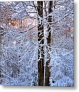 Snow Maple Morning Metal Print